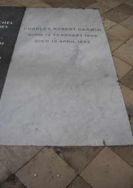 Darwin buried.JPG