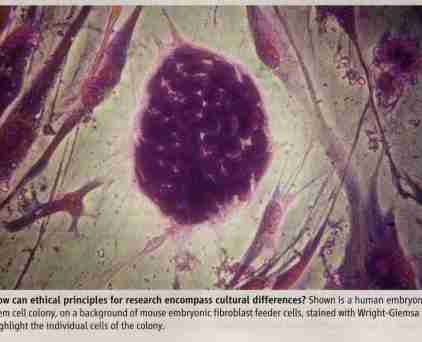 stem cells - smaller.JPG