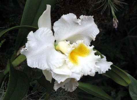 orchid-3820.jpg