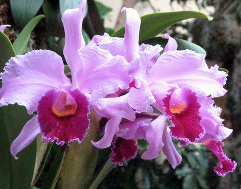 orchid-3821.jpg