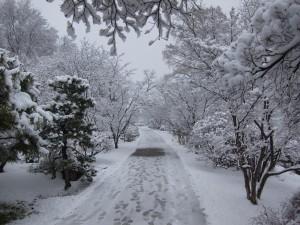 IMG_9339 Snow MBG - evv