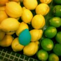 Showing the Minna Limon in a grocery store setting, nestled amongst real lemons