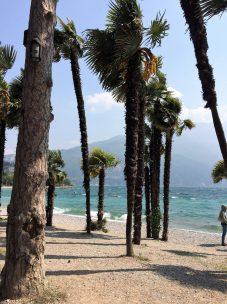 Palmen am Gardasee
