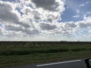 Im Weinland Bordeaux