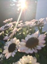 Kleine Auszeit - Sonne genießen