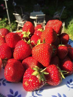 Erdbeeren - süße Verheißung.