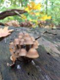 Pilze - wenn aus totem Holz neues Leben entsteht.