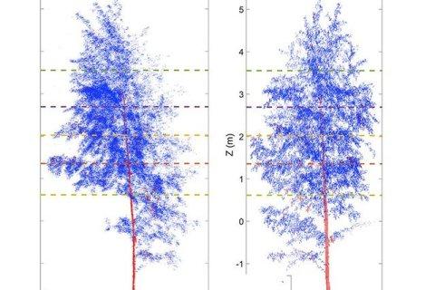 Một cây bạch dương vào ban đêm (trái) so với ban ngày (phải)