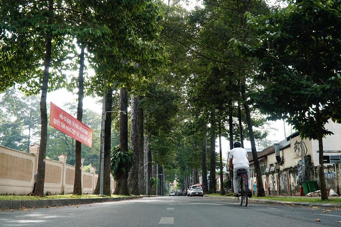 Những hàng cây có tuổi hơn một đời người giữa lòng Sài Gòn