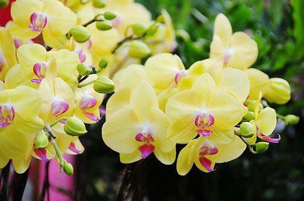 Những loᾳi hoa không nên dâng cύng trên bàn thờ vào thάng 7 âm lịch - 3