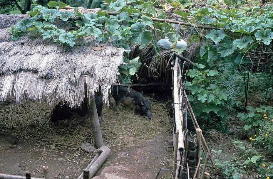 Hὸa Bὶnh: Nhà cὐa Mường - Chuồng Ngựa