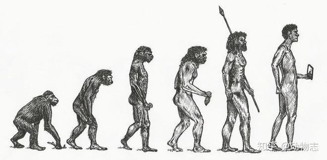 Tᾳi sao cάc loài động vật khάc cό nhiều chi, họ, nhưng con người hiện đᾳi lᾳi chỉ cό một? - Ảnh 3.