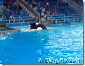 Seaworld Whale Show