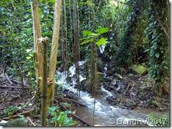 Fern Grotto stream