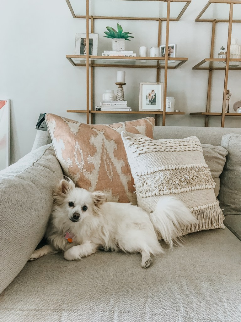how to get rid of fur on furniture