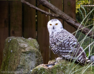 Owl Birdland October 2019