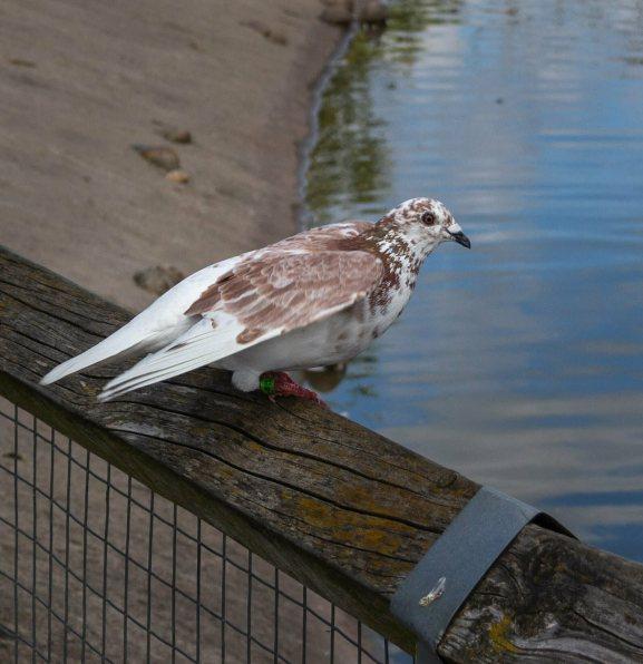 Birds at WWT Slimbridge