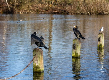Birds sitting on posts in Hyde Park, London