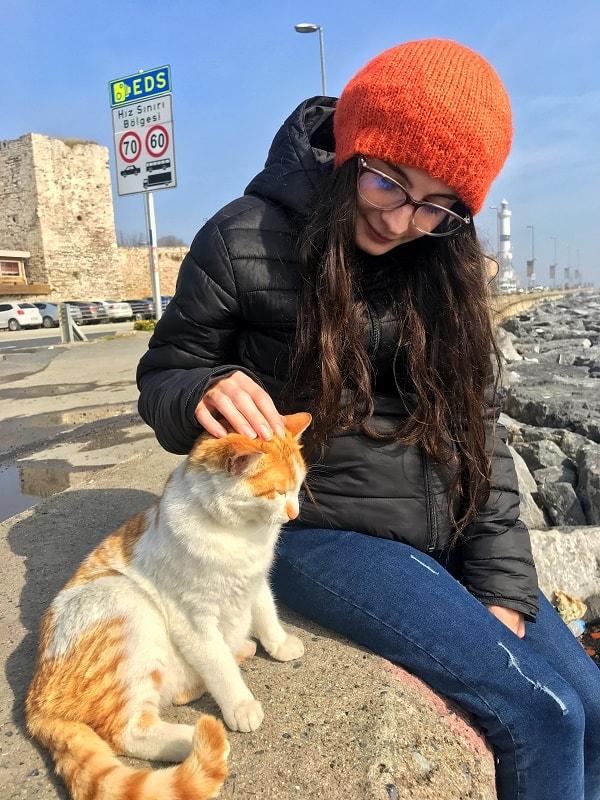 pisica istanbul daniela bojinca blog
