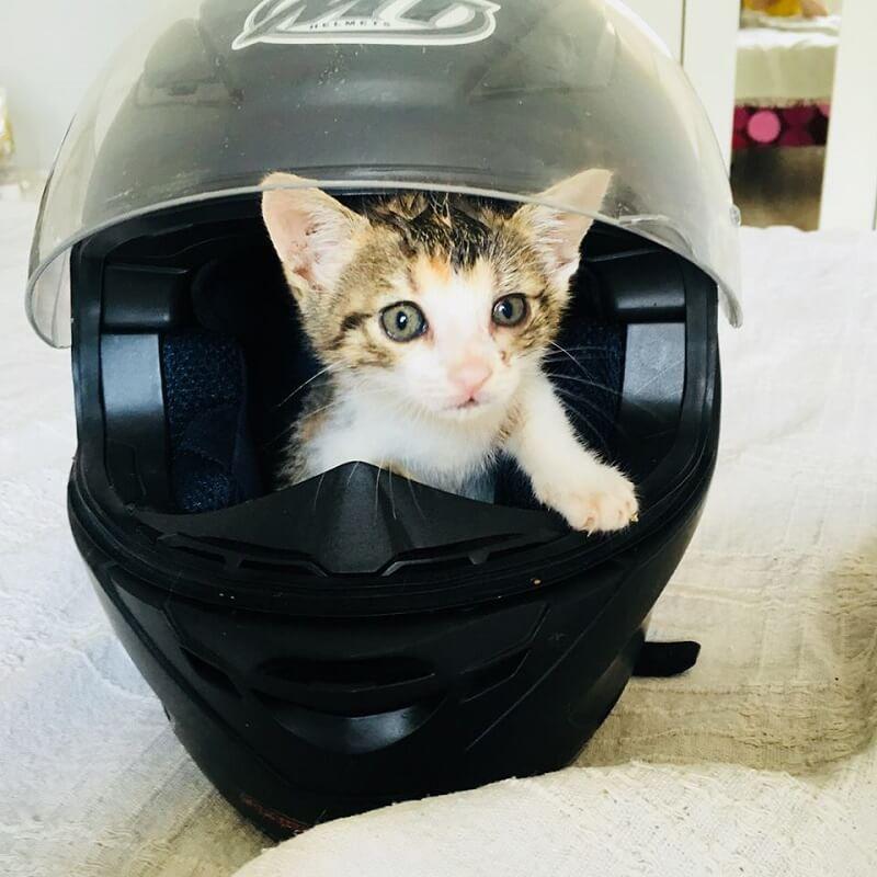 pisici spre adoptie 1