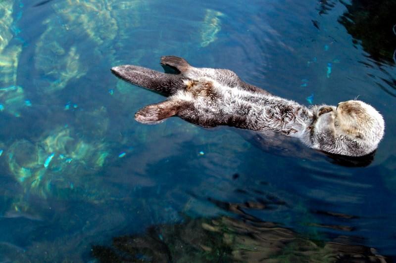 lontras-oceanario-lisboa-portugal