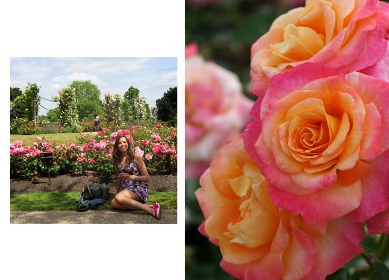 queen mary's gardens - regents park - londres - reino unido