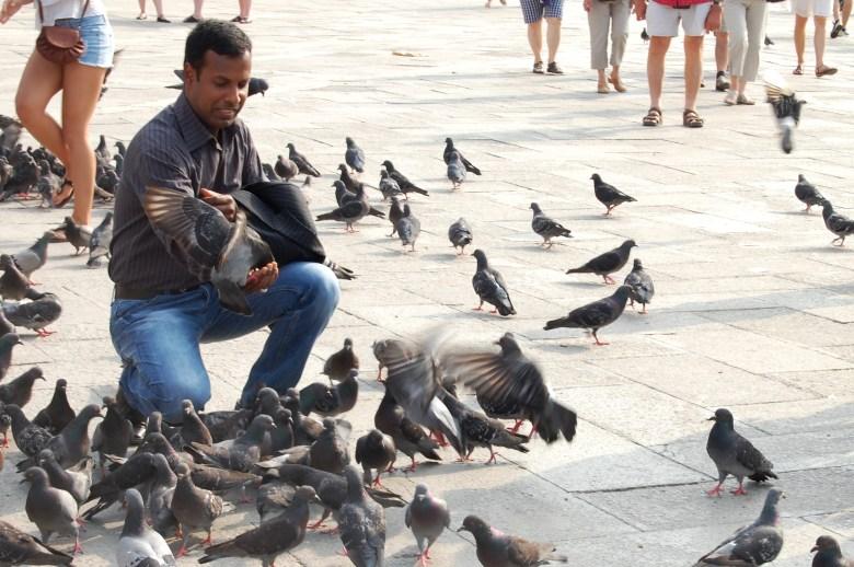 pombas - piazza di san marco - praça de são marcos - veneza - itália - pontos turísticos