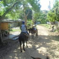 cose da vedere e fare a Samana: gita alla cascata El Limon a cavallo