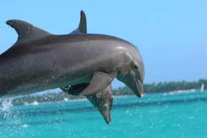 delfini che si vedranno nel viaggio in repubblica dominicana con zaino in spalla