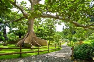 giardino botanico tra i luoghi di interesse di Santo Domingo Capitale