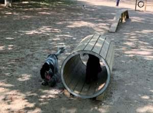 Cosa fare nel week end dell'Epifania a Milano con il proprio cane