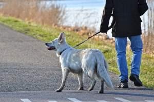 Come pulire il cane dopo la passeggiata