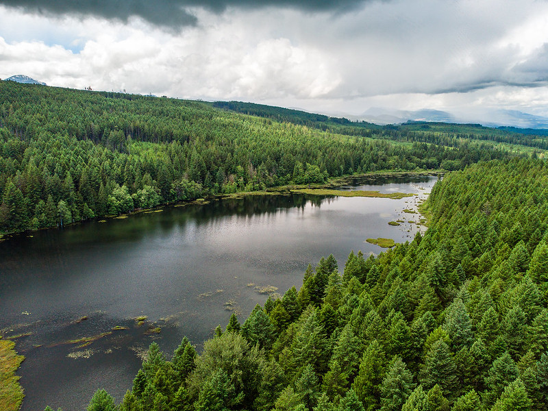 CVRD Board wants to halt Union Bay logging plans