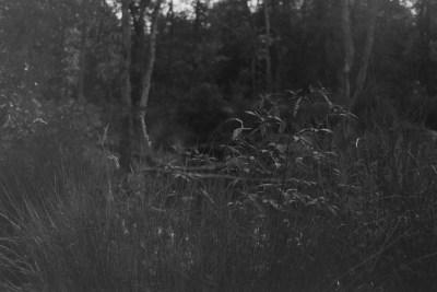 Mathory auf Lady Grey von Lomography