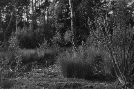 Model: Mathory   Camera: Minolta XD7   Film: Lomography Lady Grey in Rodinal 8mins 1+50