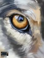 Eye of Wolf - Quick Photo Study