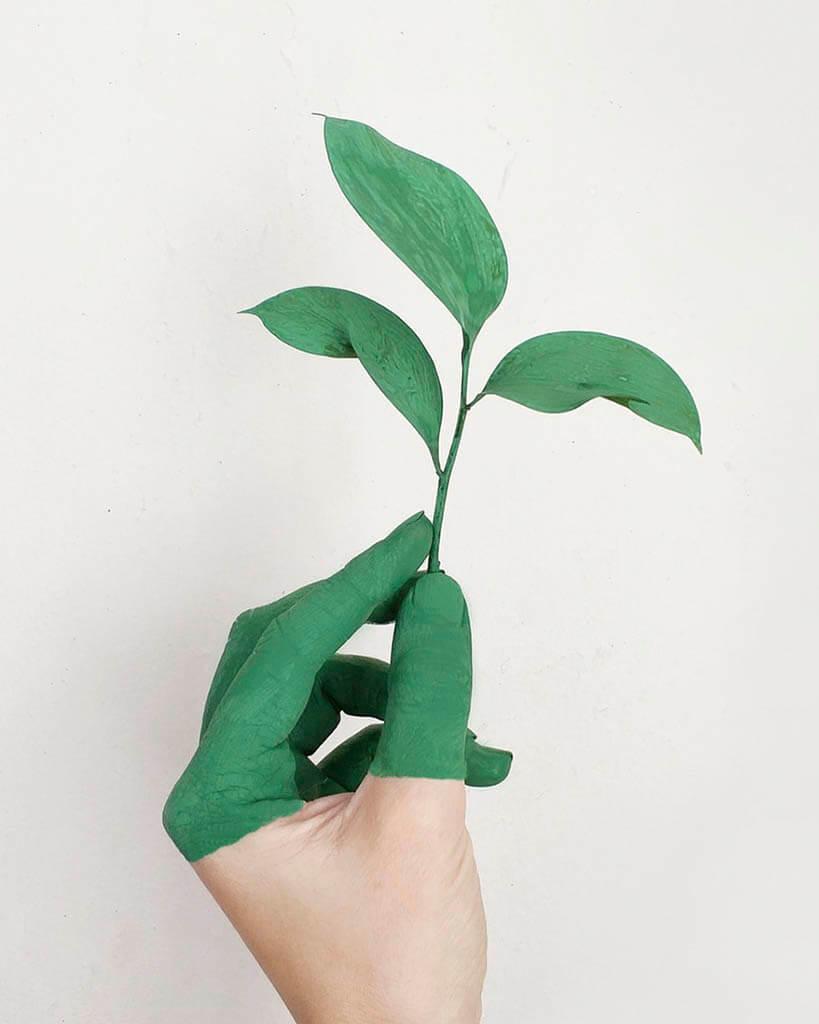 mão segurando uma folha verde