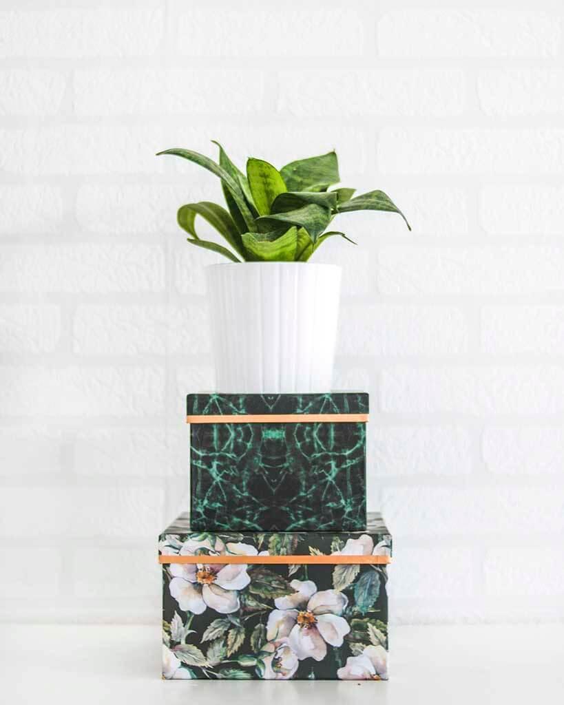 vaso de planta