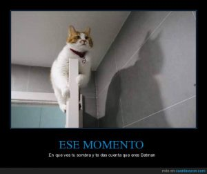 gato sombra reflejo batman referentes inspiradores