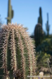 Towers of Cacti