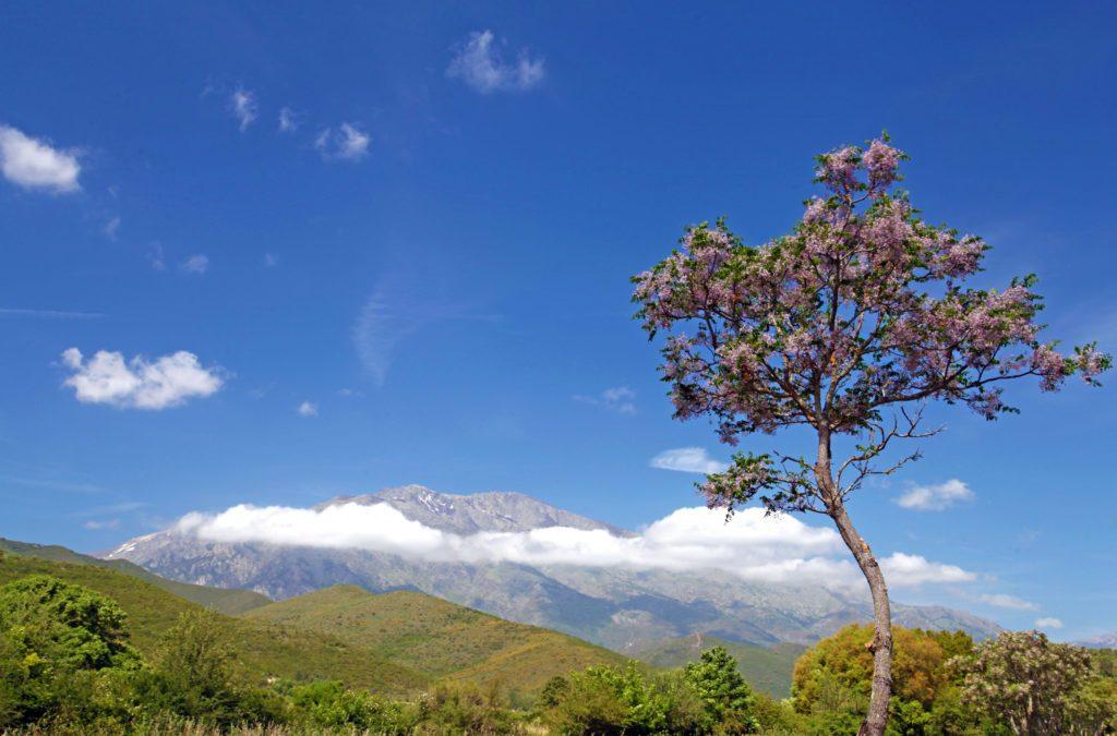 Duft-Reisende – Der Baum mit Bergpanorama