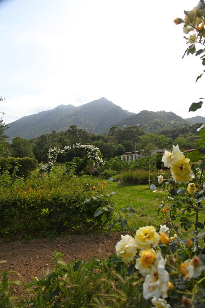 Duft-Reisende – Blick in die Berge vom Garten