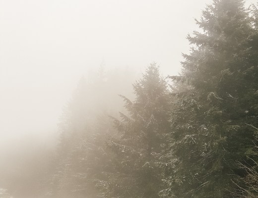 foggy oregon winter mountain snow - What I Learned - Danielle Comer Blog