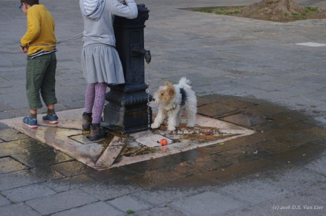 Doggy in the Jewish ghetto in Venice