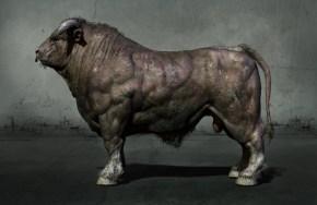 bull_side_Room