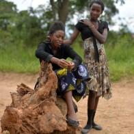 The Journey Ahead Zambie