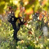 Le Vin et Monde Viticole Mas Gourdou Pic-Saint-Loup
