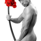 fleur-rouge-16