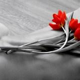 fleur-rouge-49