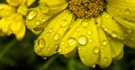 Yellow droplets